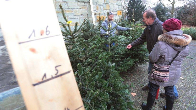worauf man beim kauf des weihnachtsbaums achten muss ikz bochum. Black Bedroom Furniture Sets. Home Design Ideas