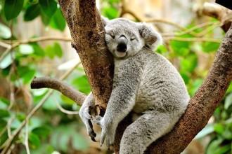 duisburg monning zoo
