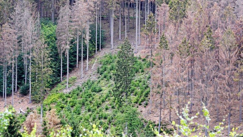 """""""Verlieren 40 Prozent des Waldes"""""""