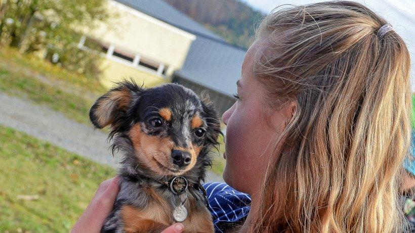 Wie Hunde Schülern in Bad Berleburg Empathie vermitteln - IKZ