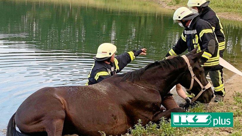 Gocher Feuerwehr rettet Pferd aus Treibsand