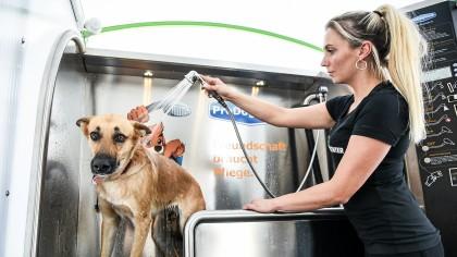 Kira Gruneberg wäscht Hündin Kimba in Wesels erster Hundewaschanlage im Weseler Autowaschcenter.